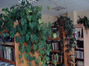 Gelgaudiškio biblioteka