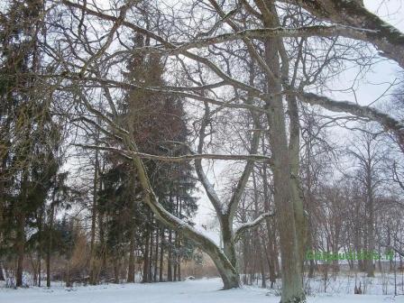 Žieminis Gelgaudiškis