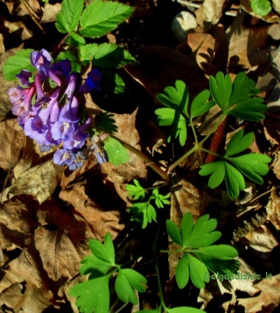 Pavasaris jau įsibėgėja