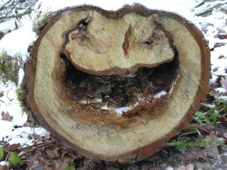 Kaštonų alėjos šypsena